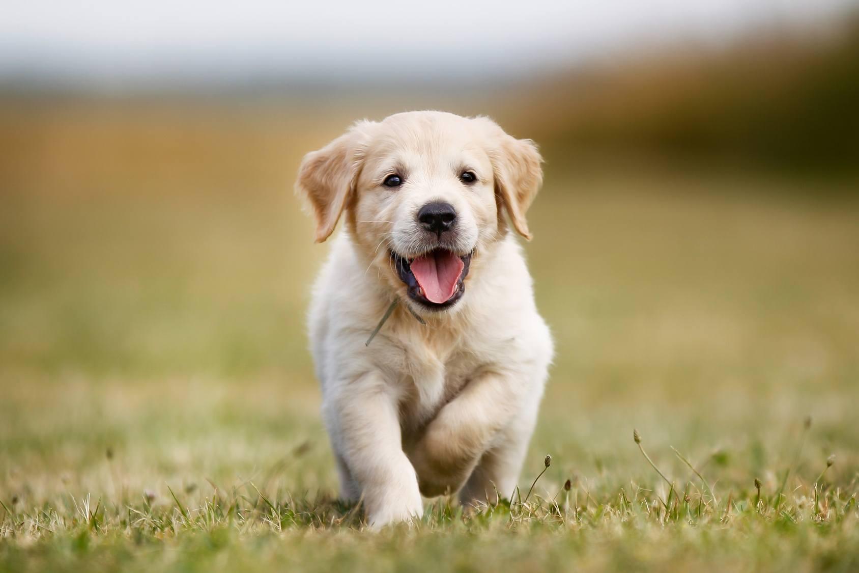 Comment choisir un chien de compagnie pour vivre en famille?