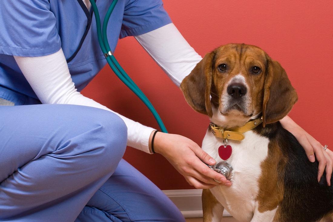 Conseils pour avoir un chien calme chez le vétérinaire